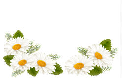Nature background with white beautiful flowers. Stock Images