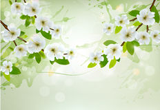 Nature background with white blossoming branches Stock Photography