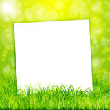 Nature background with white paper sheet in green grass Royalty Free Stock Photo