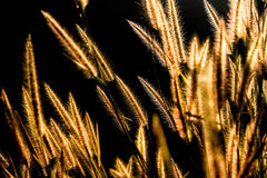 Nature background with wild grass Stock Photos