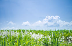 Nature background in windy day Royalty Free Stock Photo