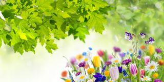 Free Nature Background With Wild Flowers Stock Photo - 110411190