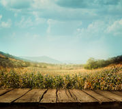 Nature background with wood  planks Royalty Free Stock Photos