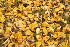 Abstract background of yellow autumn leaves on the grass royalty free stock photography