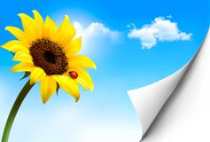 Nature background with yellow sunflower. Vector Stock Photos