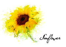 Nature background with yellow sunflower. Vector Royalty Free Stock Image