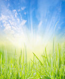 Nature background with young grass, blue sky and sun rays. Outdoor Royalty Free Stock Photography