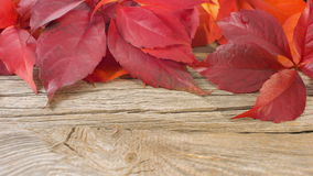 Nature backgrounds, autumn leaves on old wood background stock footage
