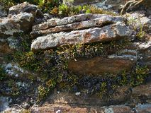 The Nature Of Baikal. Slates, overgrown with vegetation Royalty Free Stock Images