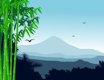 Nature bamboo background Royalty Free Stock Photo