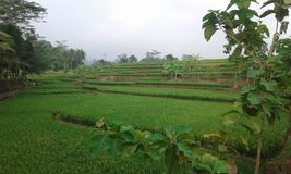 Nature Of Banjarnegara. Natural conditions in the area Banjarnegara Indonesia royalty free stock image