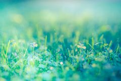 Nature banner. Fresh green grass for nature environment concept stock photo