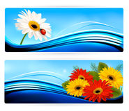 Nature banners with color flowers. Stock Photography