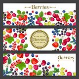 Nature banners design with berries. Stock Photos