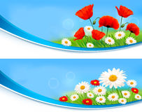 Nature banners with summer daisies and poppies. Vector Stock Image