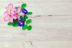 Adenium, pink desert rose and pea flower on wood background. Nature, beautiful, adenium, desert, rose, roses, plant, flora, tree, spa, garden, red, natural stock photos