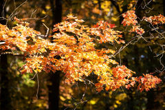 Nature. Beautiful autumn colors in the palace garden. Royalty Free Stock Photography