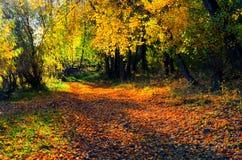 Beautiful autumn landscape. Stock Photo