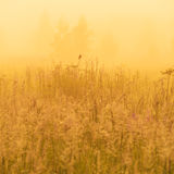 Nature beautiful background with bird on field grass and yellow. Misty sunlight stock photos