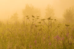 Nature beautiful background with field grass and yellow sunlight. Nature beautiful background with field grass and yellow misty sunlight royalty free stock images