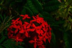 Flower nature photographer rare nikon royalty free stock photos