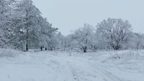 Nature beautiful forest of trees in the snow winter christmas. Nature  beautiful forest of trees in the snow winter christmas stock video