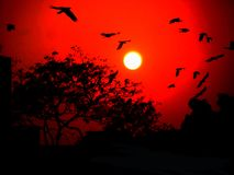 Nature Beautiful sky of Sri Lanka stock photo