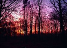 Nature. Beautiful sunset on a cold winterday Royalty Free Stock Images