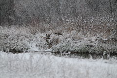 Nature Stock Photos