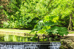 Nature. Beautiful waterfall in green park Royalty Free Stock Images