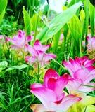 nature beauty Royalty Free Stock Photography