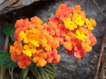Nature beauty. At boxa westbengal Royalty Free Stock Image