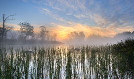 Nature beauty. Early morning at a lake with reeds in the foreground Royalty Free Stock Photo