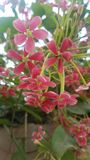 Nature beauty. Flowers, wallpaper, pakistan royalty free stock photography