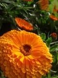 Nature Beauty lover. Nature awsomeness creation Royalty Free Stock Photos