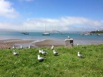 Nature beauty. Seagulls in yatch bay. Dunedin, New Zealand Stock Image