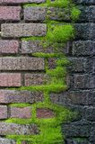 Thick carpet of moss grows from the mortar of this old brick wall royalty free stock photography