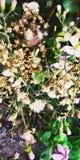 Nature& x27; belleza de s imagen de archivo