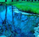 Nature& x27; bellezza di s Fotografia Stock Libera da Diritti