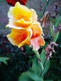 Nature& x27; bello fiore di s immagine stock