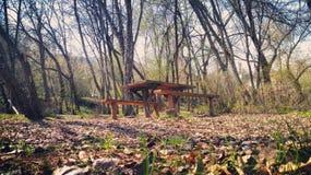 Nature bench Stock Photo
