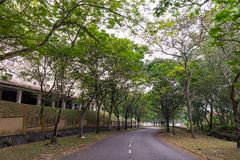 Nature Big Forest Trees. The nature of trees in Malaysia Royalty Free Stock Photography