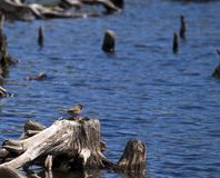 Nature bird Stock Photo