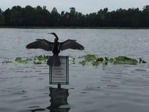 Nature bird royalty free stock photo