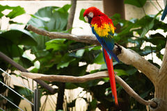 Nature & Birds Royalty Free Stock Photos