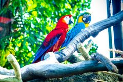 Nature & Birds Royalty Free Stock Photography