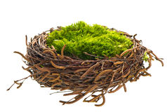 Nature birds nest with green grass Royalty Free Stock Image