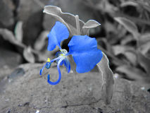 Nature bleue image stock