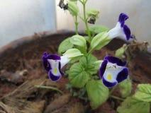 Nature bleue de fleur images libres de droits