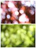 Nature blur Royalty Free Stock Photos